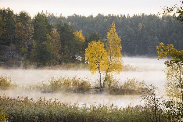 Les forêts , Les forêts suédoises , Suède