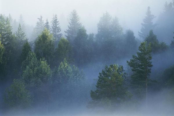 Forests , Between fog and forests , Sweden