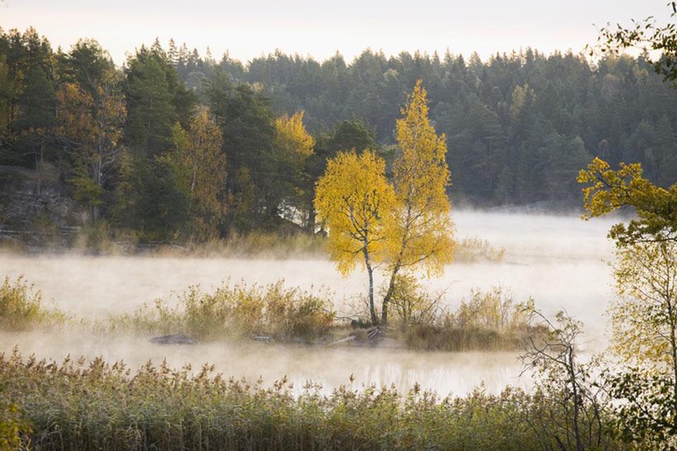 Le foreste , Le foreste della Svezia , Svezia