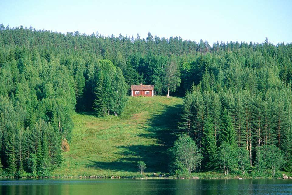 Forests , Fir trees in the north of Sweden , Sweden