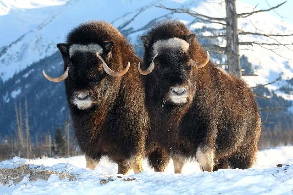 Fauna und Vögel der Tundra , Die Tundra, Schweden , Schweden
