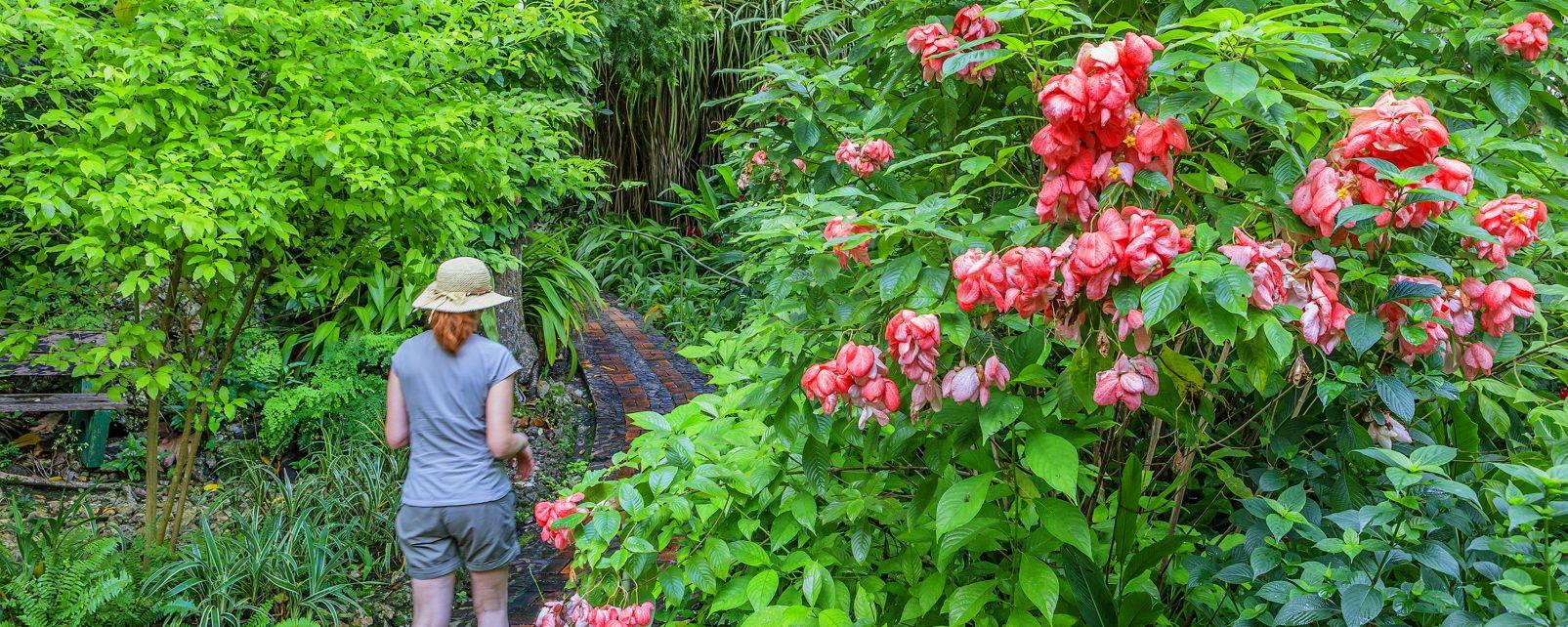 La faune et la flore, caraïbes, plante, flore, amérique, antilles, jardin d'andromède