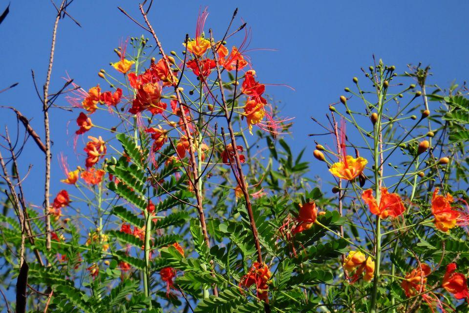 , I giardini botanici, La fauna e la flora, Barbados