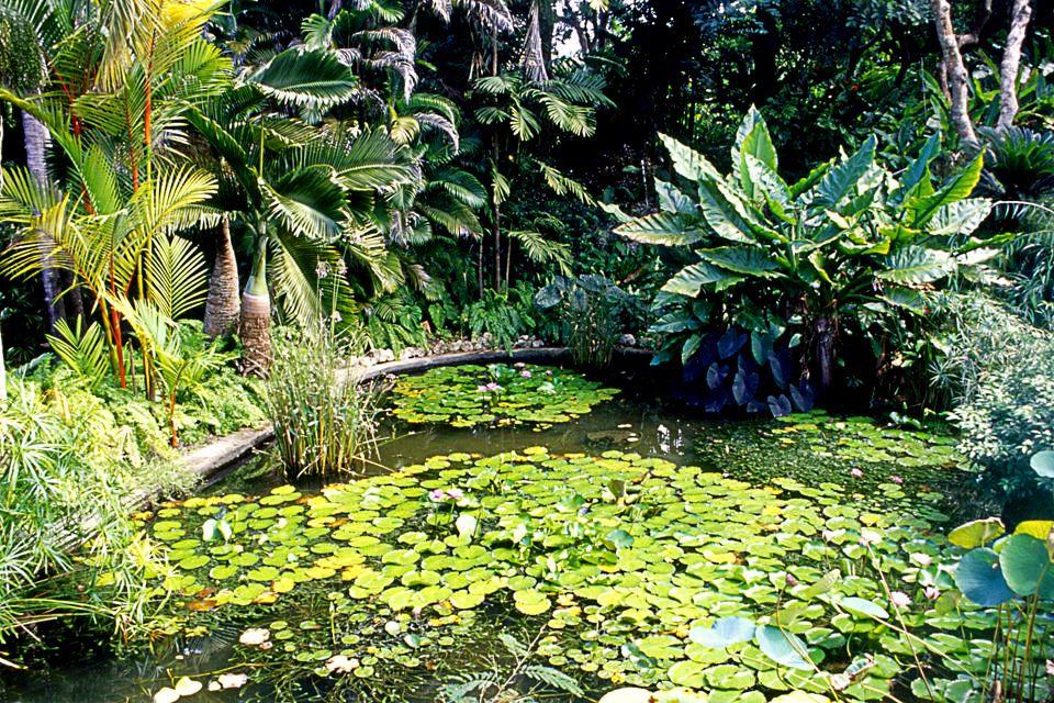 I giardini botanici, La fauna e la flora, Barbados