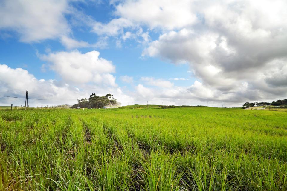 Il Nord , Campi di canna da zucchero , Sudafrica