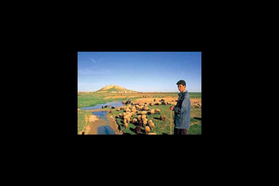 Les montagnes, vallées et déserts , Vallée du Ghab, Syrie , Syrie