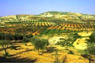 La flore , Les collines de Syrie , Syrie