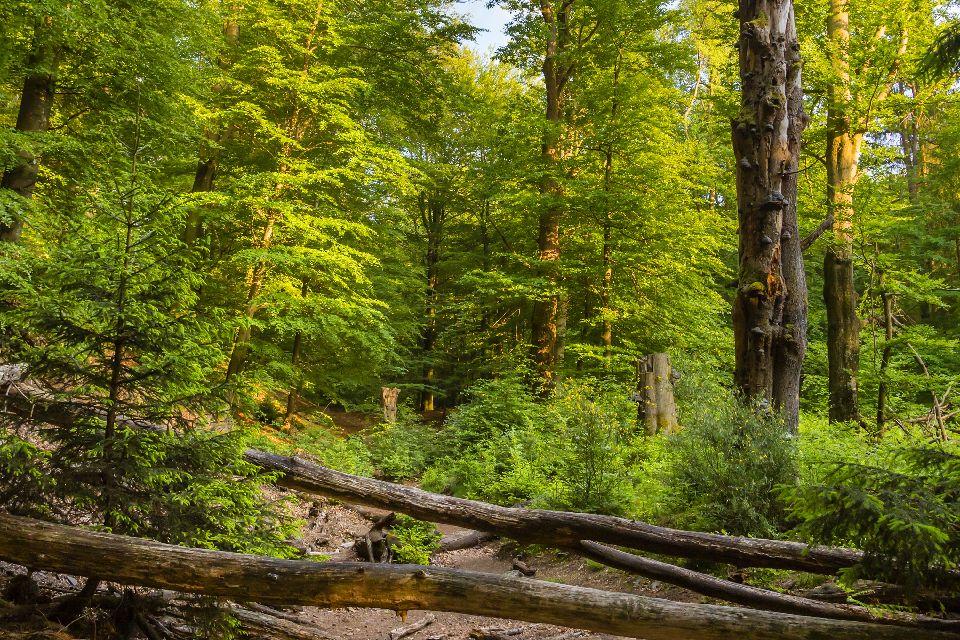 The Hautes Fagnes plateau , Hertogenwald , Belgium