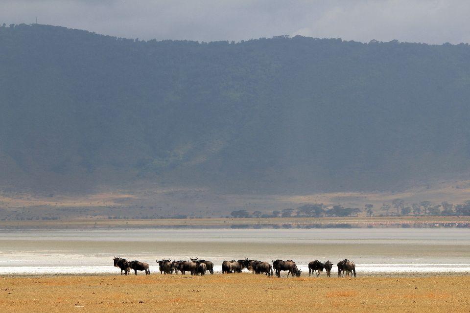 Les paysages du Nord , Brume dans le Ngorongoro , Tanzanie