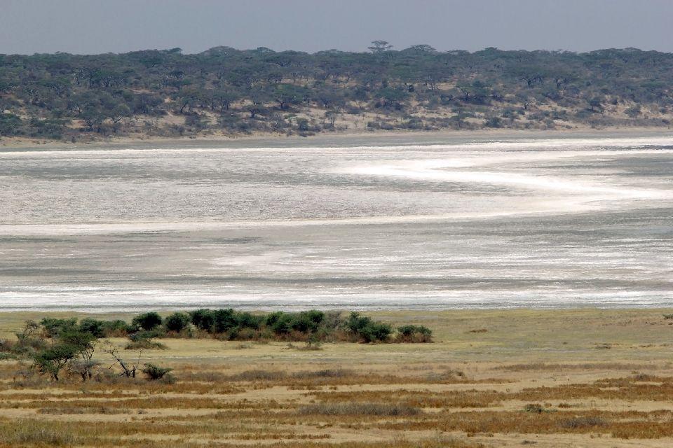 Les paysages du Nord , Le lac Ndutu, Serengeti , Tanzanie