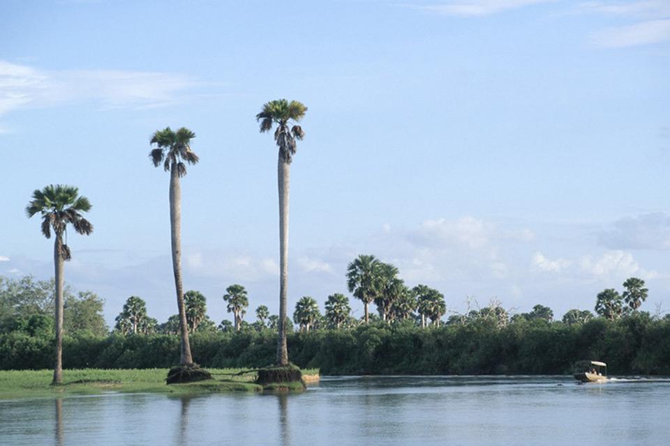 Les paysages du Sud , La rivière Rufiji , Tanzanie