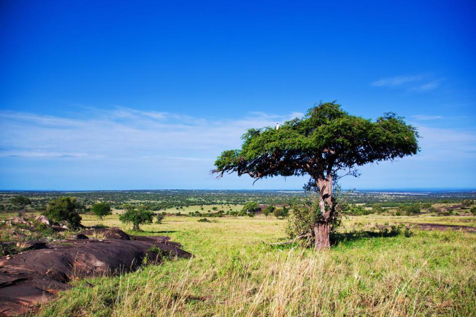 Les paysages du Sud , Les paysages du sud, Tanzanie , Tanzanie