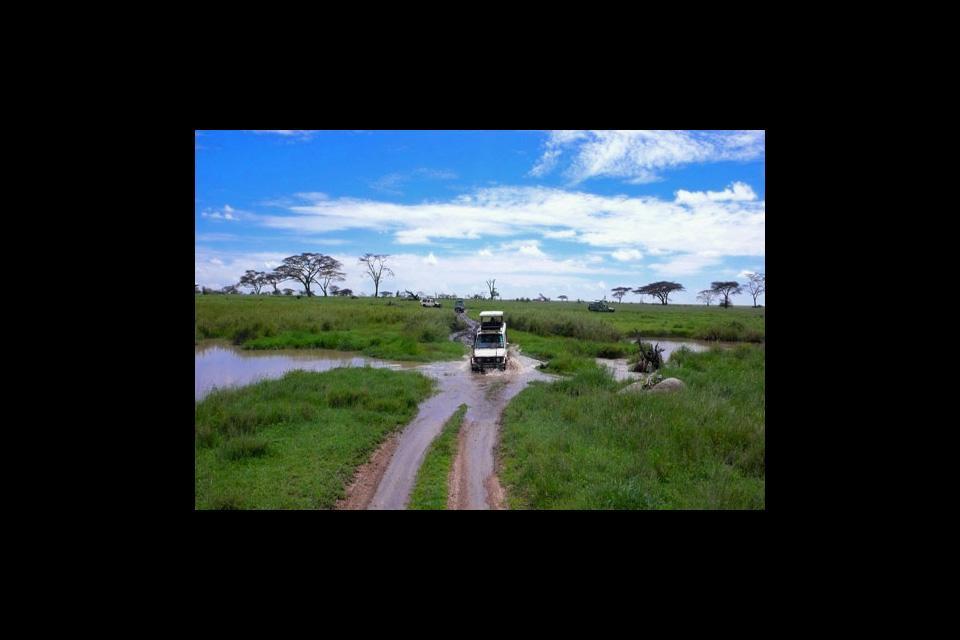Les réserves et les parcs , Safari en Tanzanie , Tanzanie