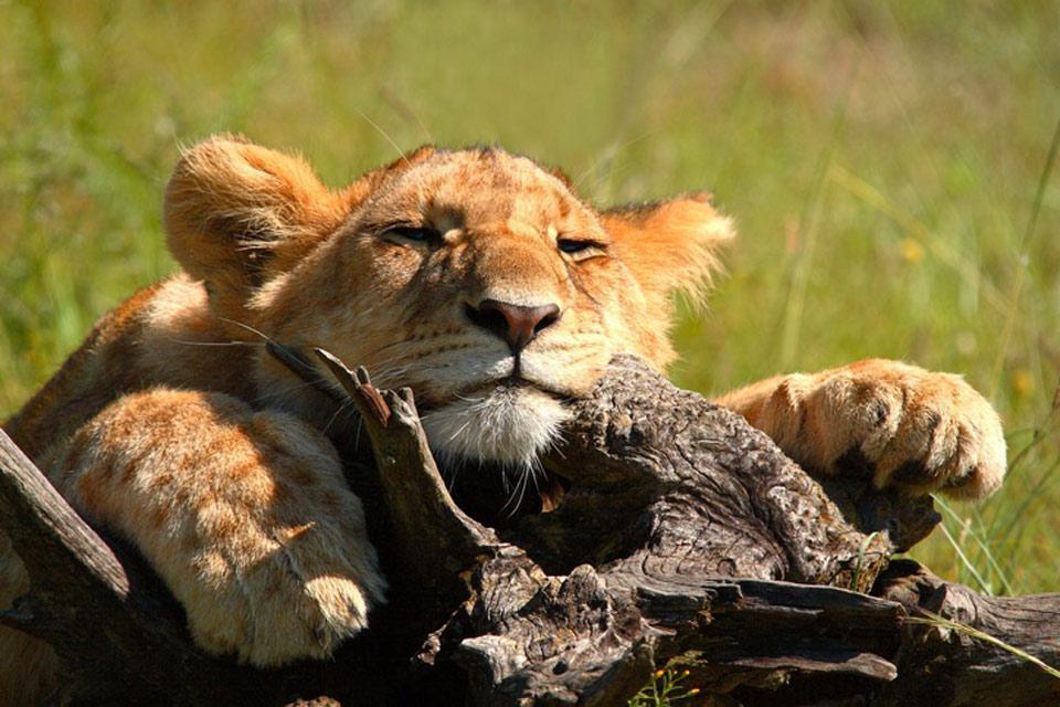 Les réserves et les parcs , Les réserves et les parcs de Tanzanie , Tanzanie