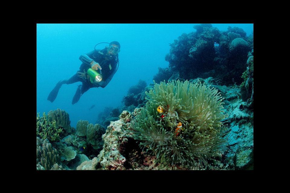 La fauna acuática , Submarinismo en Tanzania , Tanzania