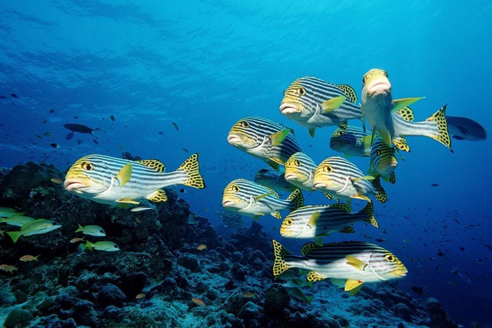 La fauna acuática , El parque marino de Mafia en Tanzania , Tanzania