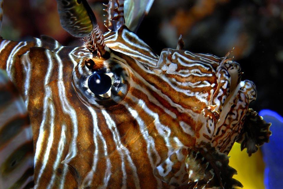 La fauna acuática , La fauna acuática del océano Índico , Tanzania