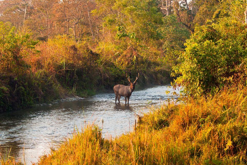 Il Parco nazionale di Lesse , Gli animali selvatici della riserva , Belgio