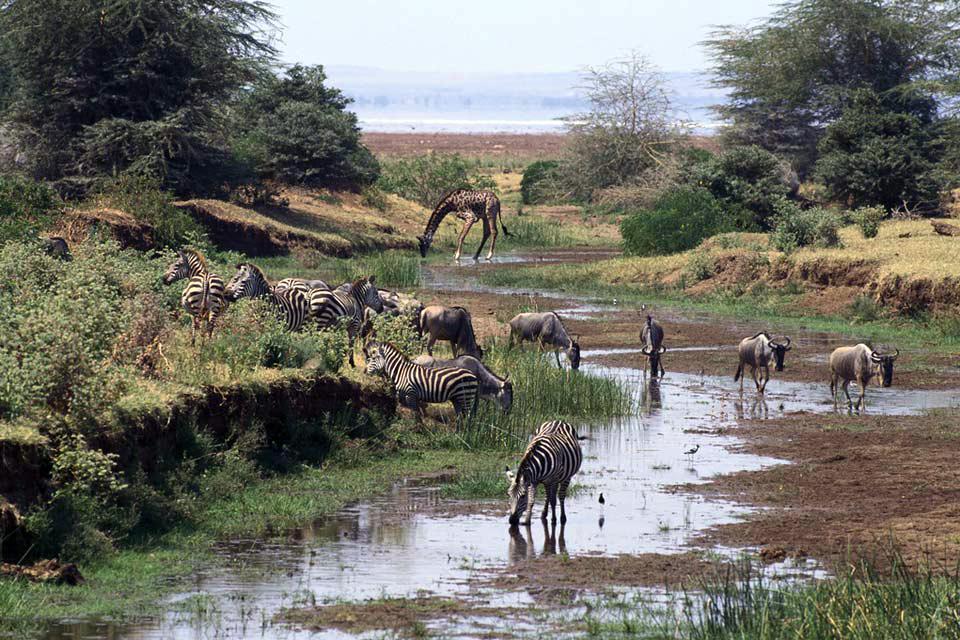 Le Parc National Mikumi , La plaine de Mkata , Tanzanie