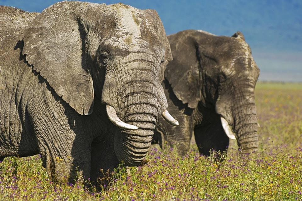 Le Parc National Mikumi , Eléphants dans le parc Mikumi. , Tanzanie