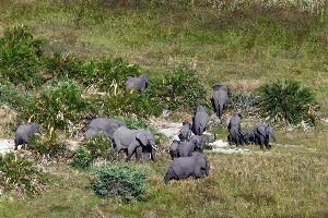 Le Parc National d'Arusha , Éléphant dans le parc national d'Arusha , Tanzanie