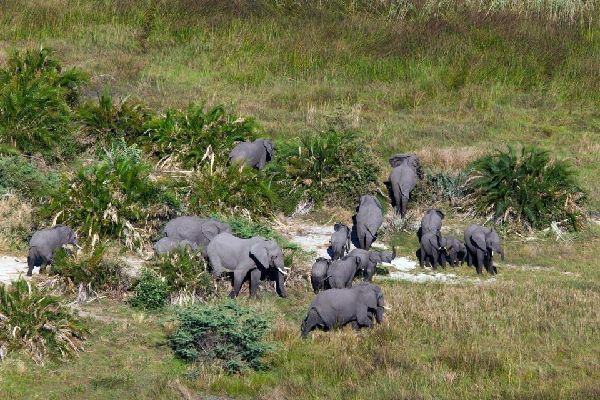 The National Park of Arusha , An elephant in the National Park of Arusha , Tanzania