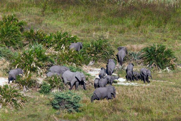 Il parco nazionale di Arusha , Elefante nel parco nazionale di Arusha , Tanzania