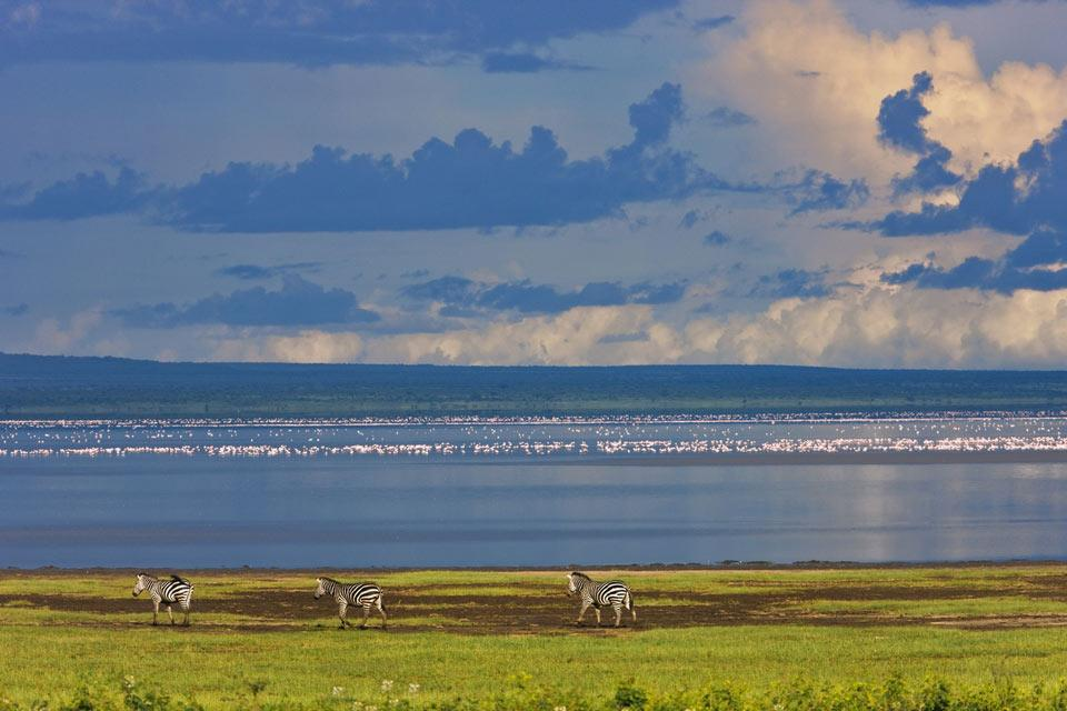 El Parque nacional del Manyara , El parque de Mayara y su lago , Tanzania