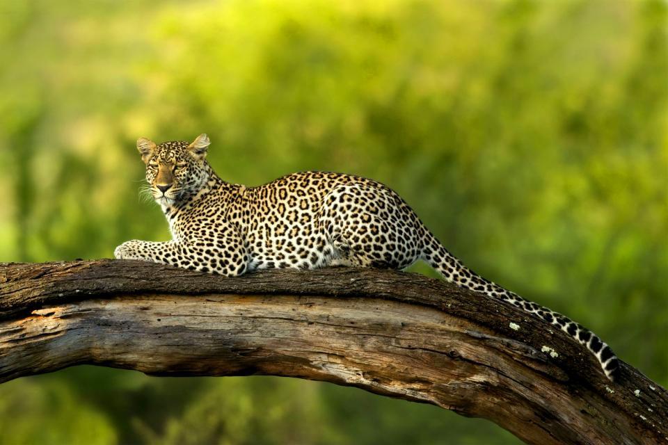 Le Parc National du Serengeti , Serengeti et Masaï Mara , Tanzanie