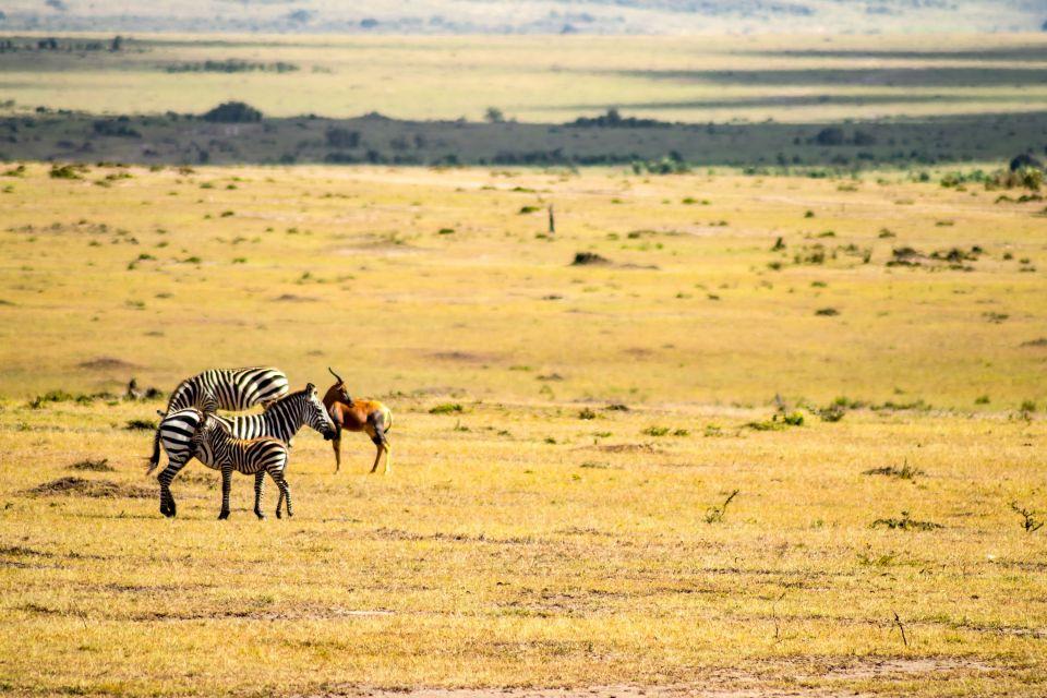 , The Zakuma national park, The fauna and flora, Chad