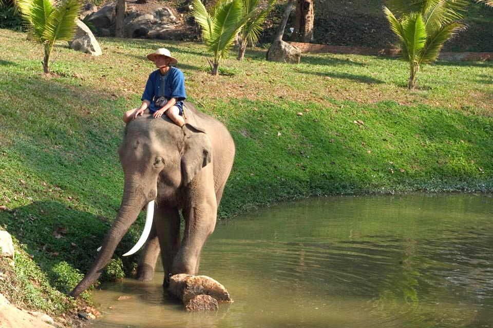 Khao Yai Park , The animals of Khao Yai , Thailand