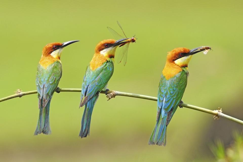 Le parc Khao Yai , Les oiseaux de Khao Yai , Thaïlande