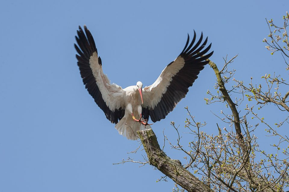 Der Storch, Das Zwin-Naturschutzgebiet, Die Küsten, Belgien