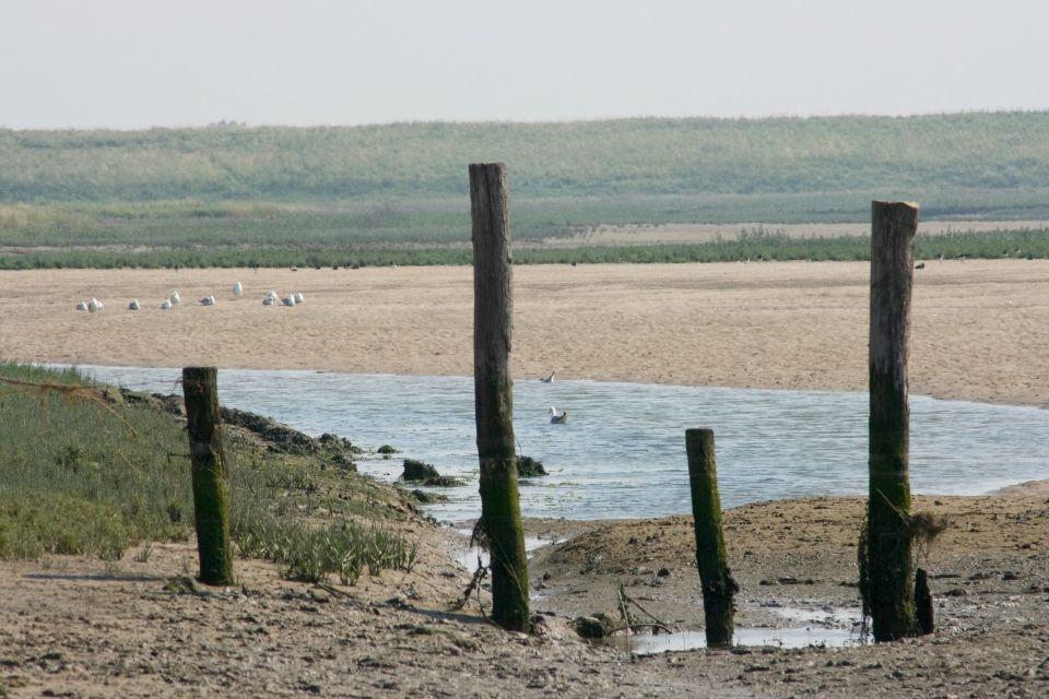 Das Sumpfgebiet, Das Zwin-Naturschutzgebiet, Die Küsten, Belgien