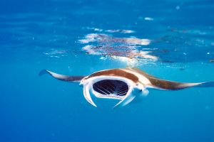 Similan and Surin marine parks , Similan & Surin National Marine Parks , Thailand