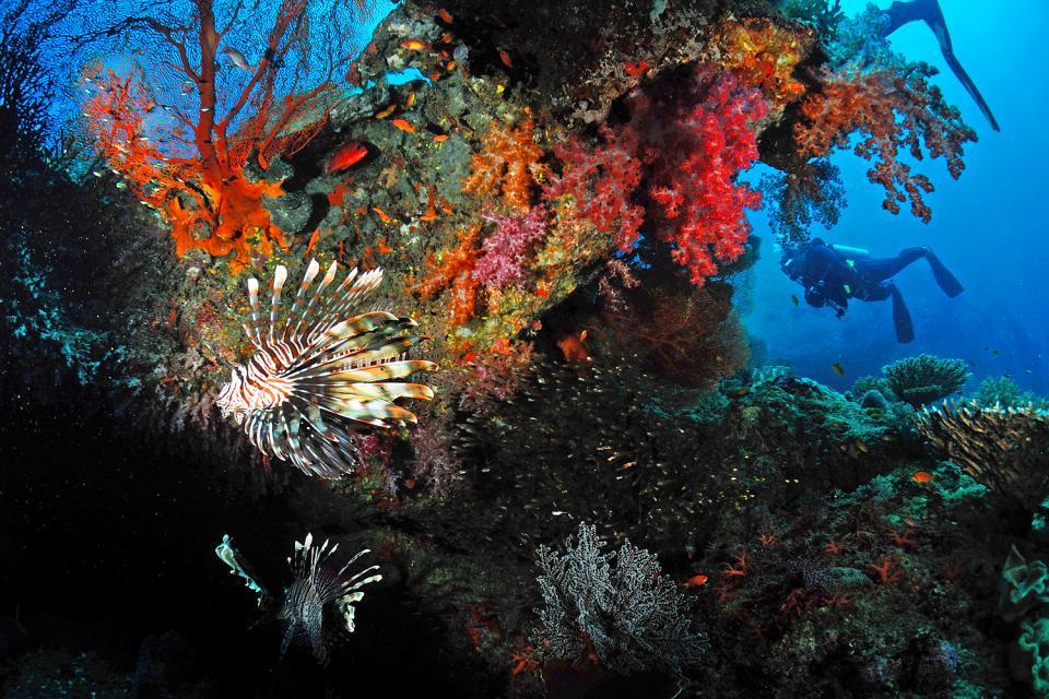 Similan and Surin marine parks , The Similan and Surin Islands, Thailand , Thailand