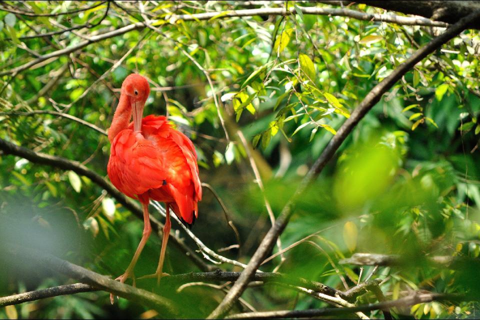 Trinidad , passeggiate nel nord dell'isola , Trinidad , passeggiate sull'isola , Trinidad e Tobago