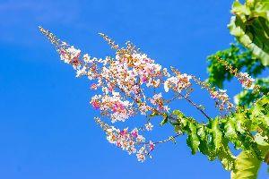 La flora , Las flores , Trinidad y Tobago