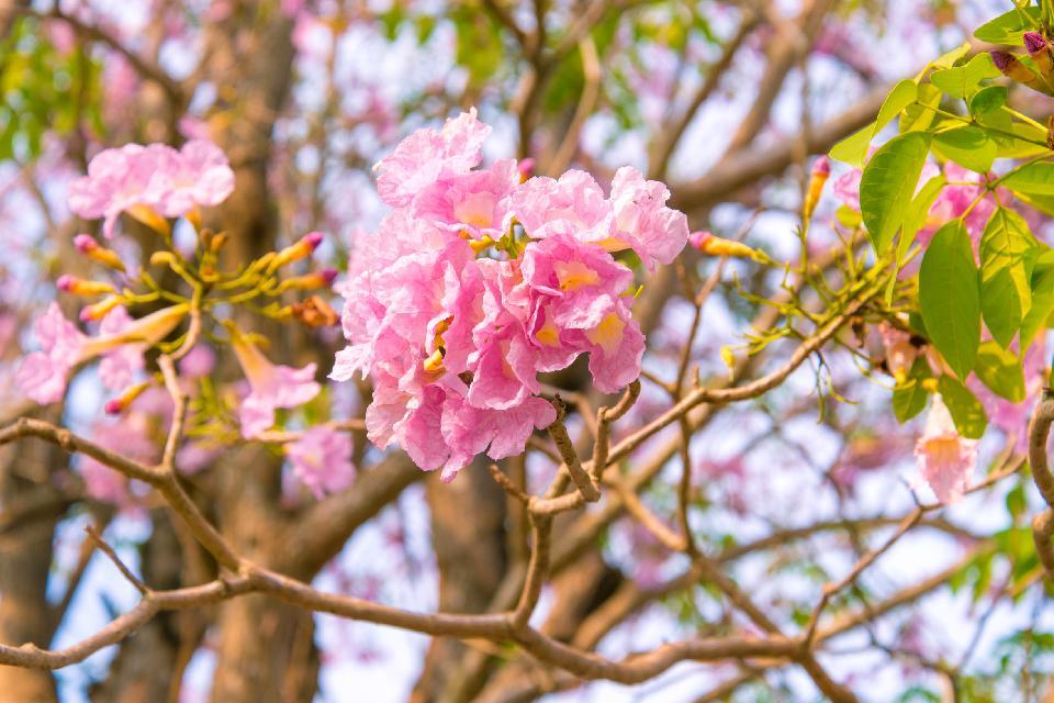 I fiori , Trinidad e Tobago