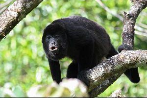 La fauna terrestre , Trinidad y Tobago