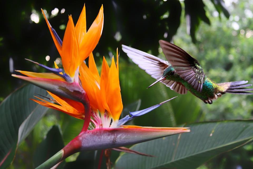 Le riserve ornitologiche , Trinidad e Tobago