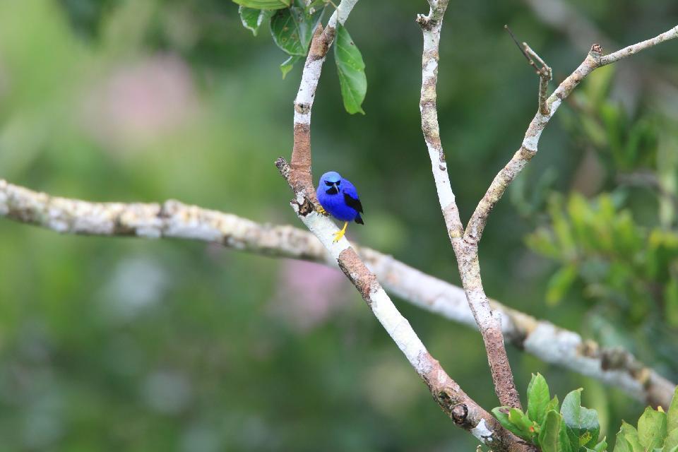 Las reservas ornitológicas , Trinidad y Tobago