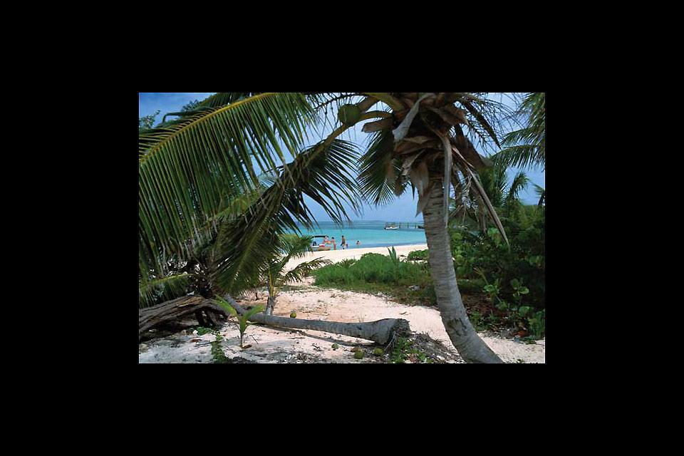 The Pineapple Festival , Bahamas
