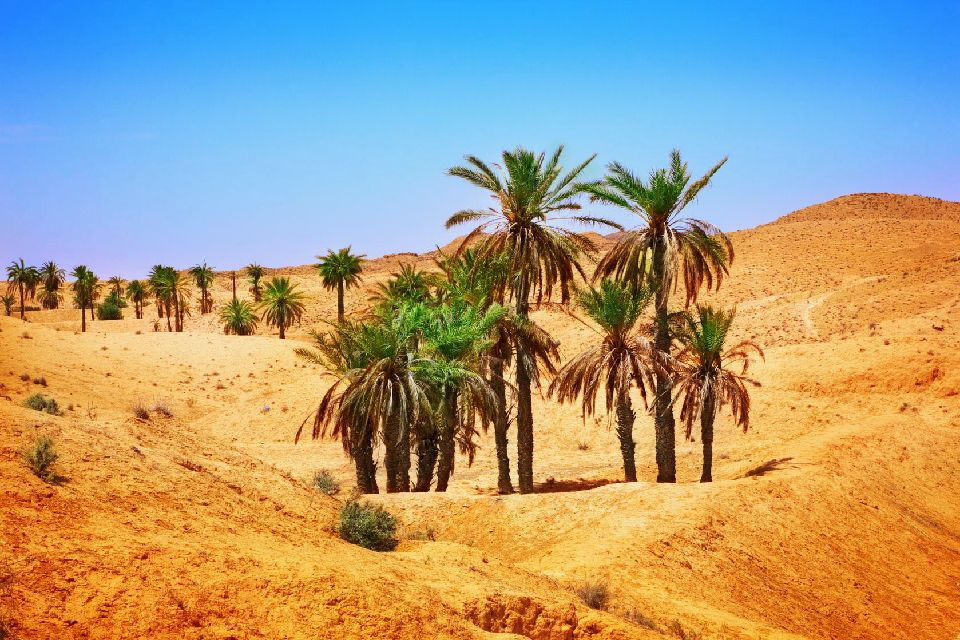 Le désert tunisien , Palmiers dans le désert du Sahara , Tunisie