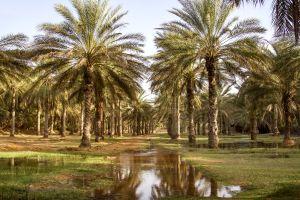 L'oasis de Ksar Ghilane , L'oasis Ksar Ghilane , Tunisie