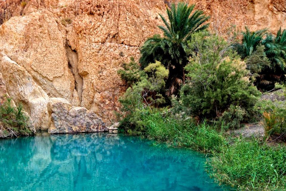 Le village de Chebika , Végétation de Chebika , Tunisie