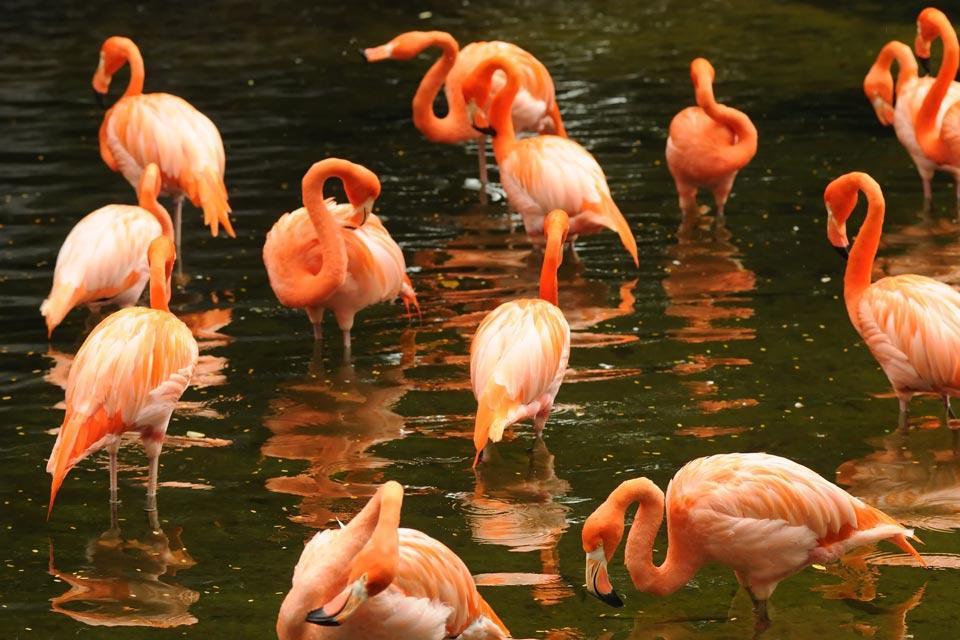 Les oiseaux et le Parc national d'Ichkeul , Flamants roses , Tunisie