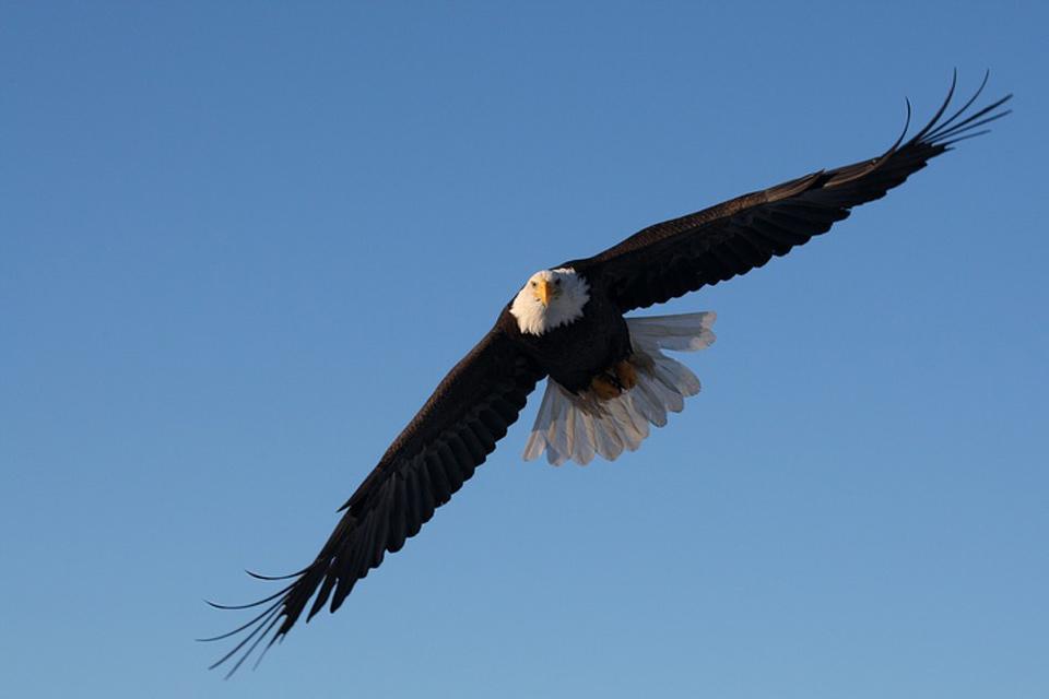 Les oiseaux et le Parc national d'Ichkeul , Tunisie