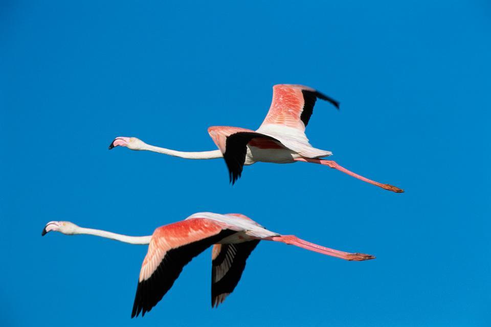 Les oiseaux et le Parc national d'Ichkeul , Envol au parc national de l'Ichkeul , Tunisie