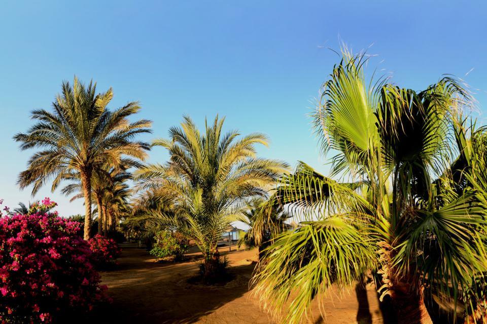 Flora , Palme in Tunesien , Tunesien